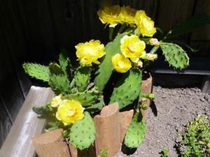 Detail Image for art Yellow Cactus