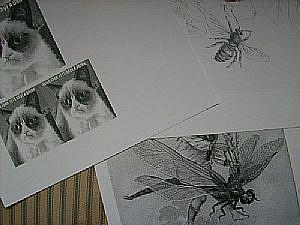 Detail Image for art Her Meow-jesty