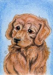 Art: Golden Retriever Puppy - SOLD by Artist Kim Loberg