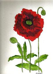 Art: Poppy original painting by Artist Nancy Denommee