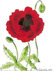 Art: Poppy original painting on card by Artist Nancy Denommee