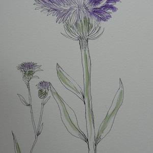 Detail Image for art thistle