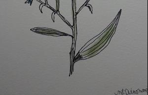Detail Image for art cornflower