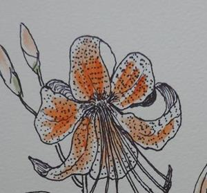 Detail Image for art tigerlily