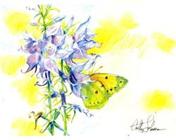 Art: Primary Butterfly by Artist Cathy  (Kate) Johnson