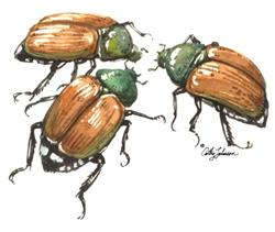 Art: Japanese Beetles by Artist Cathy  (Kate) Johnson