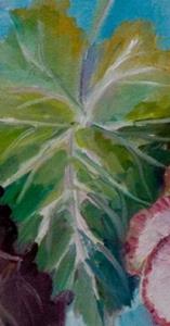 Detail Image for art Begonias