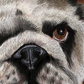 Detail Image for art Bulldog Crush