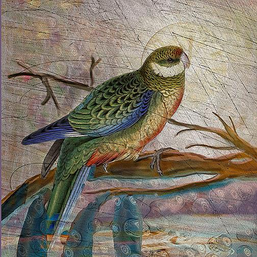 Art: Stanley Parakeet by Artist Alma Lee
