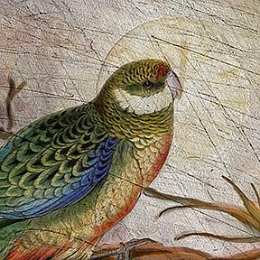 Detail Image for art Stanley Parakeet
