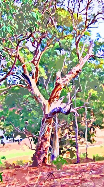 Art: River Red Gum Tree at Barossa Reservoir by Artist Joan Hall Johnston
