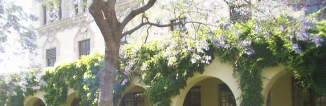 Art: Jacaranda meets Wisteria in the Math Department by Artist Kathabela Wilson