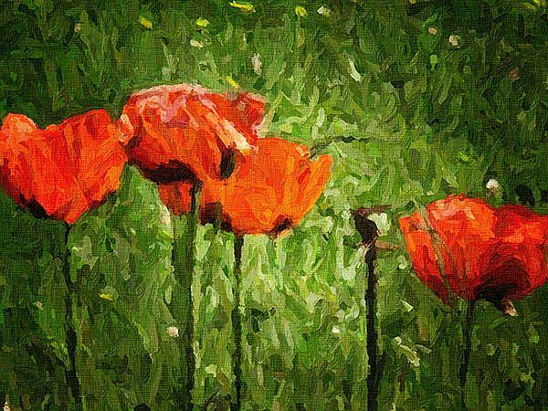 Art: Poppies by Artist Carolyn Schiffhouer