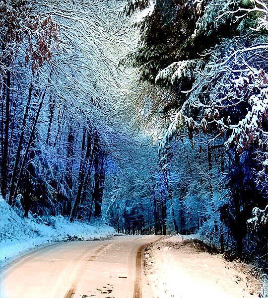Art: Into Winter by Artist Carolyn Schiffhouer
