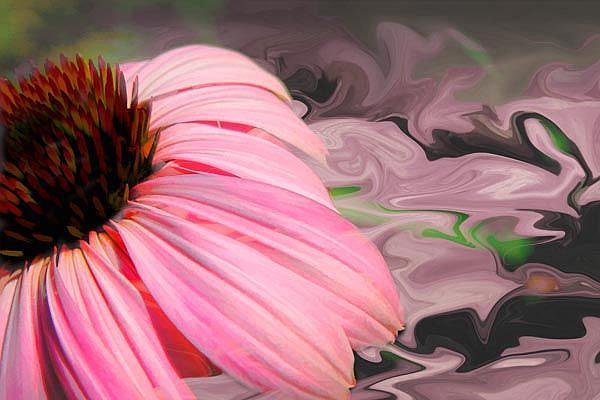 Art: Echinacea Jazzed by Artist Carolyn Schiffhouer