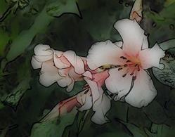 Art: Orchid Dawn by Artist Carolyn Schiffhouer