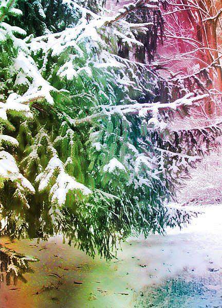 Art: Conifer in Rainbow Colors by Artist Carolyn Schiffhouer