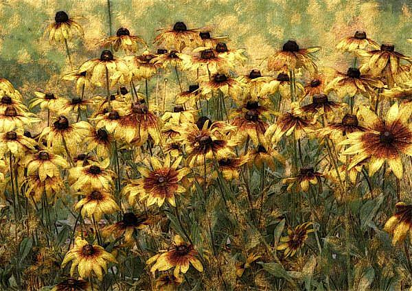Art: Cone Flower Field by Artist Carolyn Schiffhouer