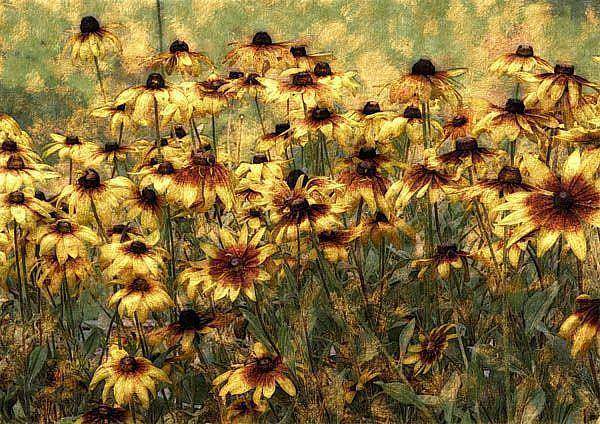 Art: Cone Flower Field by Artist Carolyn Schiffhouer