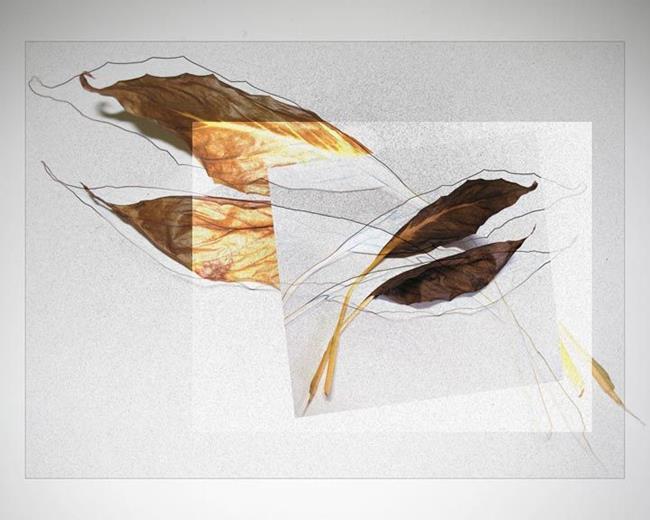 Art: Leaf Line by Artist Carolyn Schiffhouer