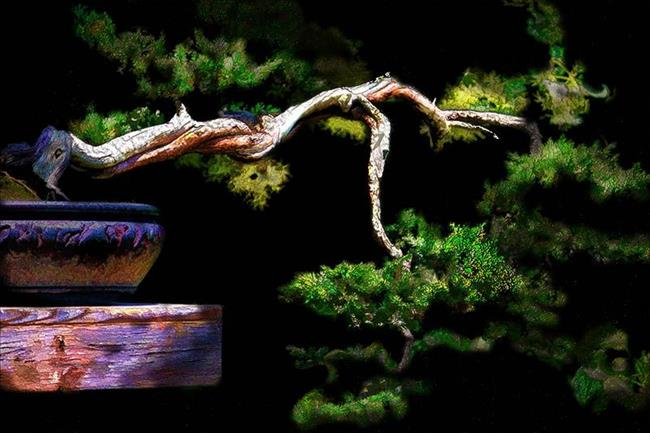 Art: Bonsai Grace by Artist Carolyn Schiffhouer