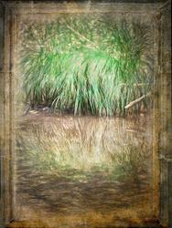 Art: By the Creekside by Artist Carolyn Schiffhouer