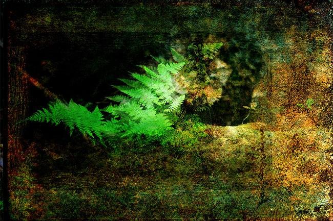 Art: Ferns in Light by Artist Carolyn Schiffhouer
