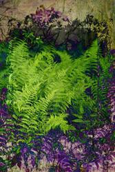 Art: Ferns in Purple and Green by Artist Carolyn Schiffhouer