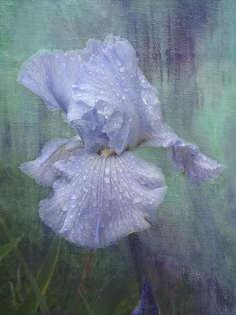 Art: Glory Blue by Artist Carolyn Schiffhouer