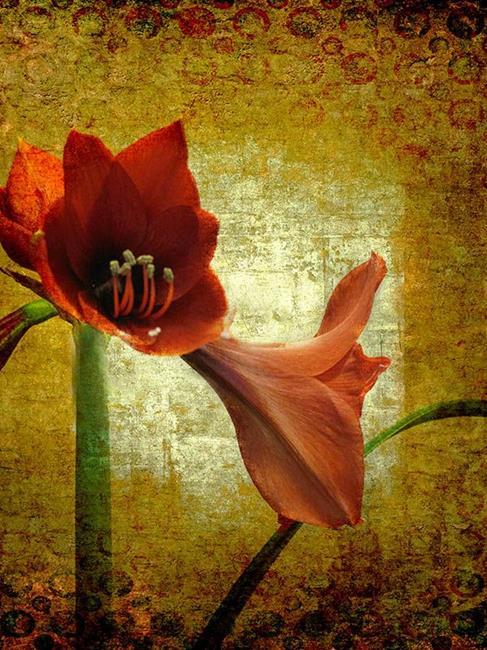 Art: Stately Amaryllis by Artist Carolyn Schiffhouer