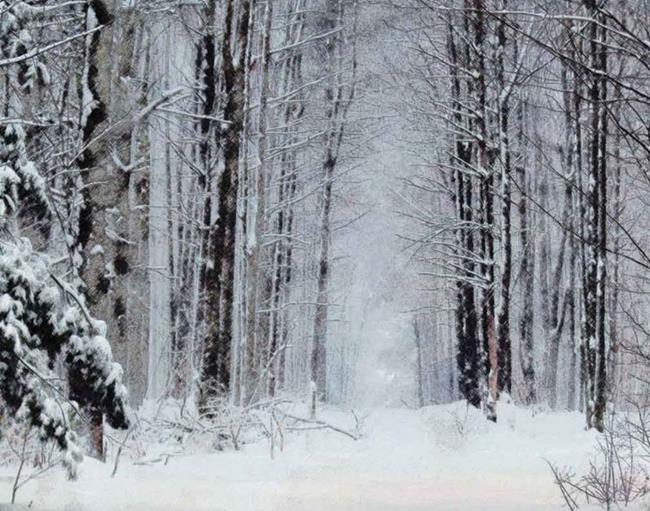 Art: Winter Trees by Artist Carolyn Schiffhouer