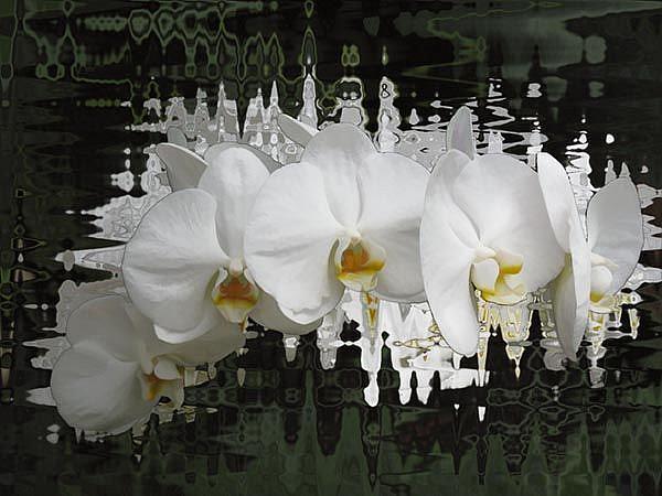Art: Orchid Jazzed by Artist Carolyn Schiffhouer