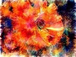 Art: Red Poppy by Artist Carolyn Schiffhouer