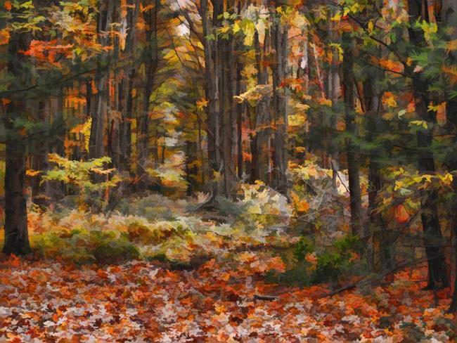 Art: Fall Leaves by Artist Carolyn Schiffhouer