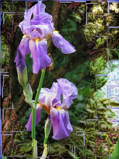Art: Iris in a Pair by Artist Carolyn Schiffhouer