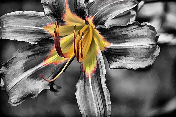 Art: Center of the Lily by Artist Carolyn Schiffhouer
