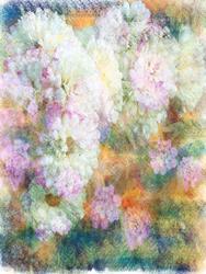 Art: Dusted Mums by Artist Carolyn Schiffhouer