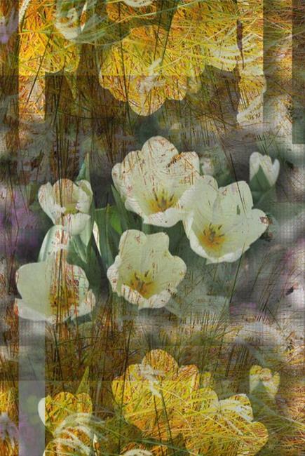 Art: Flowers and Fields by Artist Carolyn Schiffhouer