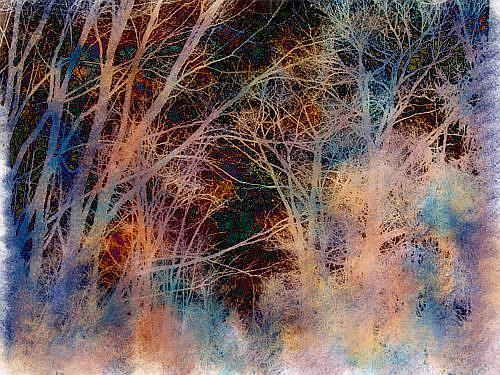Art: Stopping by Woods by Artist Carolyn Schiffhouer