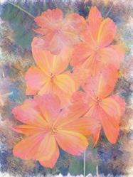 Art: Flowers Muted by Artist Carolyn Schiffhouer