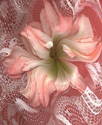 Art: Amaryllis Dance by Artist Carolyn Schiffhouer
