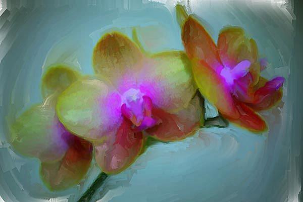 Art: Orchid Play 2 by Artist Carolyn Schiffhouer