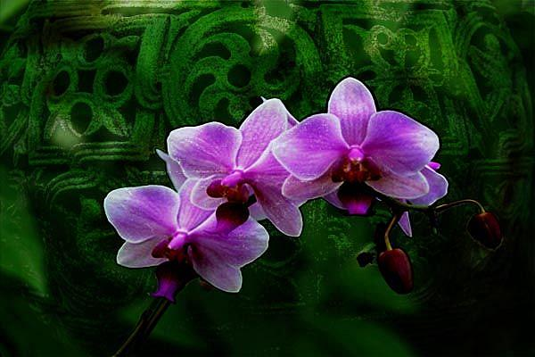 Art: Orchid and Carving by Artist Carolyn Schiffhouer