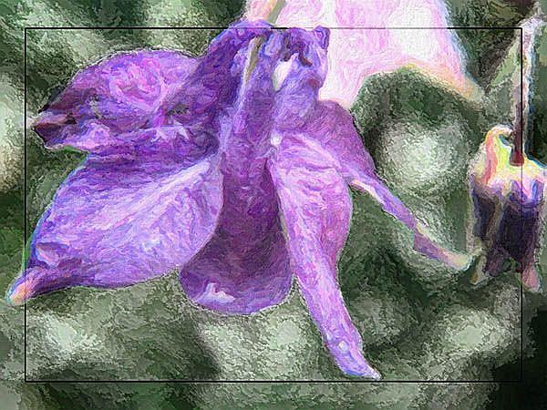 Art: Columbine in Purple by Artist Carolyn Schiffhouer