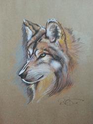 Art: Wolf.jpg by Artist Richard R. Snyder