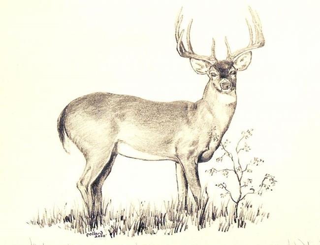 deer drawings - photo #29