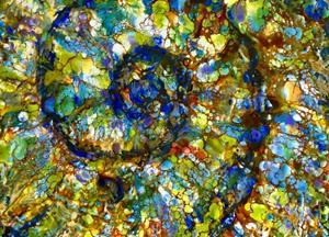 Detail Image for art Nautilus Shell