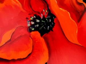 Detail Image for art ENGLISH WILD RED POPPY