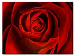 Art: PASSION ROSE by Artist Kate Challinor