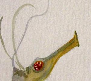 Detail Image for art Tawdry Seahorses
